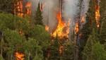 Ola de calor causa incendios en Australia