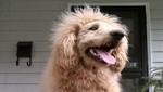 El perro león que generó miedo en Estados Unidos [VIDEO]