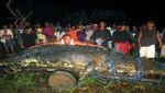 El cocodrilo más grande del mundo murió