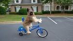 El perro que monta bicicleta y patina sorprende al mundo [VIDEO]