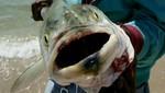 Atún capturado cerca de California todavía tiene rastros de radiación de Fukushima
