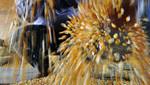 Un arqueólogo estadounidense descubre que Indígenas del Perú fueron los primeros en cultivar el maíz