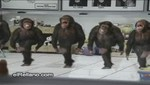 Mono que hace ejercicio la rompe en las redes sociales [VIDEO]