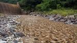 Marea de peces muertos  en Argentina [VIDEO]