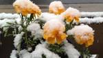EE.UU: Atípica nevada en plena primavera