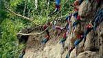 Unos 2,500 turistas visitan anualmente la reserva natural del Manu