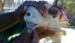 Nace tiburón con un solo ojo en Estados Unidos (Video)