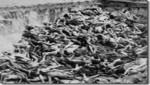 Genocidios, educación y legislación