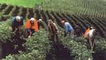 INDECOPI capacita a agricultores de café de la zona del VRAEM sobre el uso de marcas