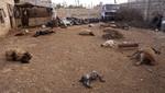 El Comité de Relaciones Exteriores del Senado da visto bueno para ataque militar de Estados Unidos en Siria