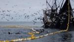 Establecen cronograma de vedas de anchoveta para embarcaciones artesanales y de menor escala