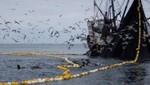 En la zona Norte-Centro se iniciará la Segunda Temporada de pesca industrial del recurso anchoveta