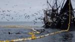 Embarcaciones artesanales y de menor escala reiniciarán capturas de anchoveta y anchoveta blanca