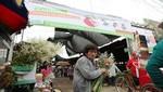 Minsa realizará campaña en cementerios de Lima para prevenir el dengue