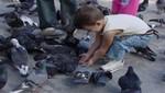 Proliferación de palomas pone en riesgo salud de las personas