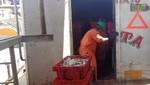 Incautan en Paita 10 mil kilos de anchoveta que iban a ser destinados a la elaboración ilegal de harina