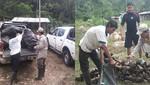 Ex cocaleros producirán más de 180 hectáreas de plátano en comunidades de Supte (Huánuco)