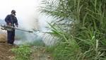 Fumigarán 99,000 viviendas de Iquitos por incremento de casos de dengue