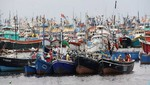 Suspenden extracción de anchoveta en zona del litoral de Ica