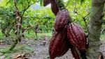 MINAGRI crea los Centros Regionales de Innovación Agroempresarial (CRIA) en el VRAEM