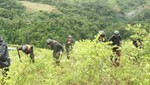 Treinta mil hectáreas ilegales de coca se erradicarán en el 2014