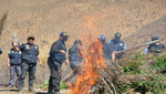 Policía Nacional halló e incineró más de 3 mil plantones de marihuana