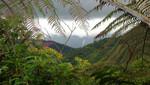 Bosque de Protección Alto Mayo renueva imagen