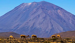 Áreas Naturales Protegidas de Arequipa estarán presentes en Foro Mundial de Recursos Naturales