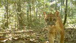 Parque Nacional del Manu se consolida como el lugar con mayor biodiversidad del mundo