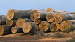 Presidencia del Consejo de Ministros garantiza a las comunidades nativas firme protección del Estado frente a la tala ilegal