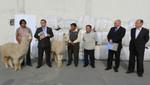 MINAGRI: Pequeños criadores exportan lote de 10 toneladas de fibra de alpaca a Italia