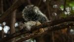 En Lambayeque conmemoran 6 años de la recuperación del Santuario Histórico Bosque de Pómac