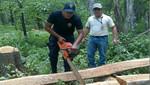 En operativo conjunto guardaparques del SERNANP y efectivos PNP detienen acciones de tala ilegal