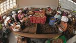 Madre de Dios: Tambopata genera cerca de 2 millones de soles en aprovechamiento de castaña