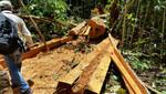 Loreto: PNP y SERNANP recuperan más de 100 pies de tablares de madera talada