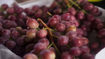 Más de 9 millones de cajas de uva peruana ingresaron a China en la última campaña