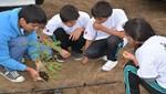 Reserva Nacional de Lachay inició forestación de más de mil plantones de tara