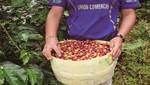 Otorgan certificación orgánica a café producido en el bosque de protección Alto Mayo