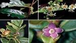 Nuevas especies de flora silvestre para la ciencia son registradas en el Parque Nacional del Manu