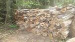 SERNANP alerta a autoridades de Tumbes sobre tala ilegal