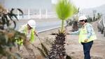 Serpar denuncia tala de más de 300 árboles en carretera Panamericana Sur