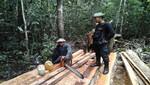 Tablares son recuperados durante operativo contra la tala ilegal en la Reserva Nacional Allpahuayo Mishana