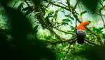 Huánuco se prepara para celebrar el 51 aniversario del Parque Nacional Tingo María