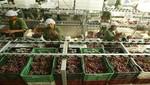 Exportaciones peruanas podrían retomar crecimiento el segundo semestre del año