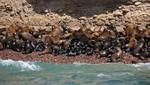 """Reserva Nacional de Paracas implementa nuevo circuito turístico: """"Rumbo a la playa Mendieta"""""""