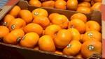 Perú inició exportaciones de mandarina al mercado de Brasil