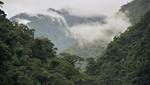 Más de S/. 114 millones generan proyectos de conservación de bosques en áreas naturales protegidas