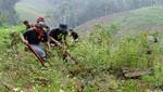 Erradican 22 mil hectáreas de hoja de coca y destruyen 85 laboratorios de droga