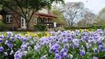 Te invitamos a seguir el aroma de las flores y a viajar en la primavera