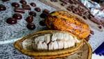 Escogen al Perú como sede de evento cumbre sobre el cacao a nivel mundial